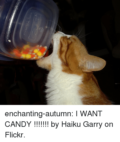 Candy, Tumblr, and Blog: enchanting-autumn:  I WANT CANDY !!!!!!! by Haiku Garry on Flickr.