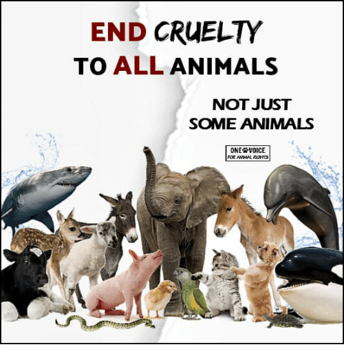 Animals, Memes, and Voice: END CRUELTY  TO ALL ANIMALS  NOT JUST  SOME ANIMALS  ONE VOICE