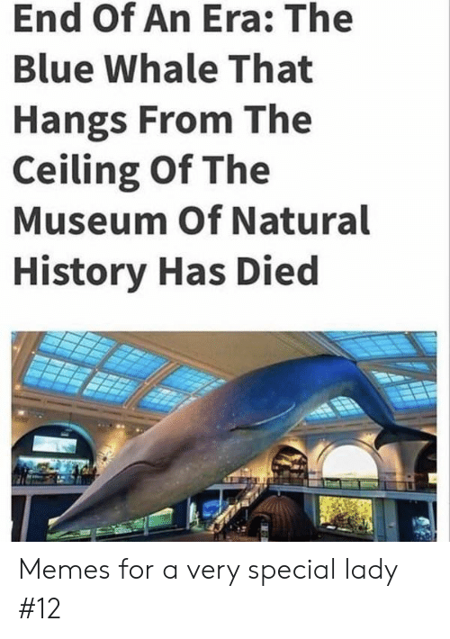whale: End Of An Era: The  Blue Whale That  Hangs From The  Ceiling Of The  Museum Of Natural  History Has Died Memes for a very special lady #12