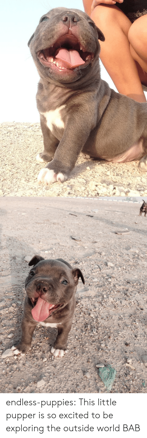 Puppies, Tumblr, and Blog: endless-puppies: This little pupper is so excited to be exploring the outside world  BAB