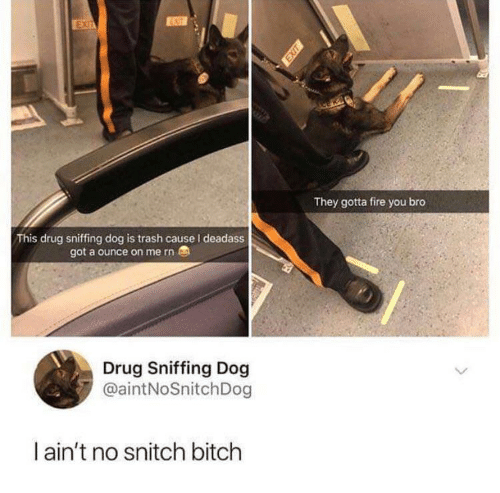 No Snitch: ENIT  They gotta fire you bro  This drug sniffing dog is trash cause I deadass  got a ounce on me rn  Drug Sniffing Dog  @aintNoSnitchDog  l ain't no snitch bitch