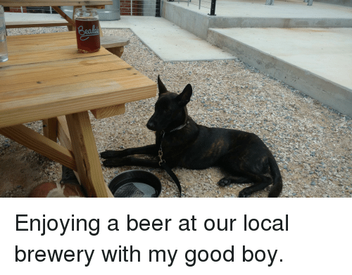 Beer Good And Boy Enjoying A At Our Local Brewery With My