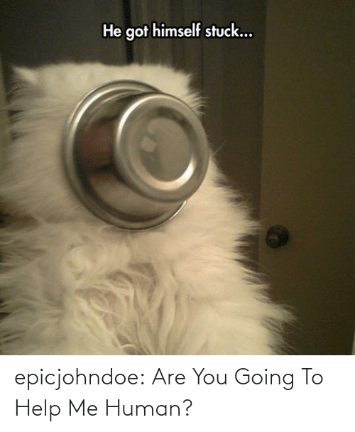 help me: epicjohndoe:  Are You Going To Help Me Human?