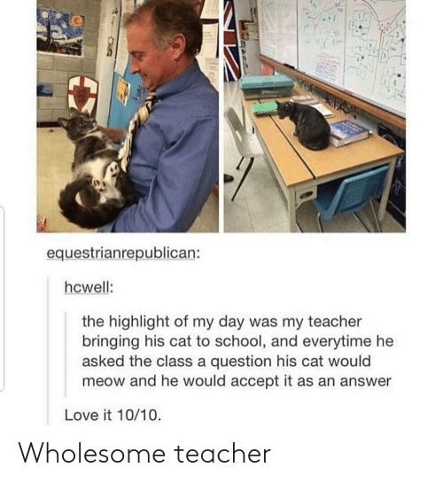 Love, School, and Teacher: equestrianrepublican:  hcwell:  the highlight of my day was my teacher  bringing his cat to school, and everytime he  asked the class a question his cat would  meow and he would accept it as an answer  Love it 10/10 Wholesome teacher