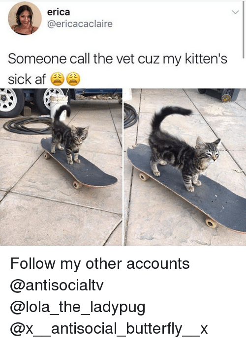 vetting: erica  @ericacaclaire  Someone call the vet cuz my kitten's  sick af Follow my other accounts @antisocialtv @lola_the_ladypug @x__antisocial_butterfly__x