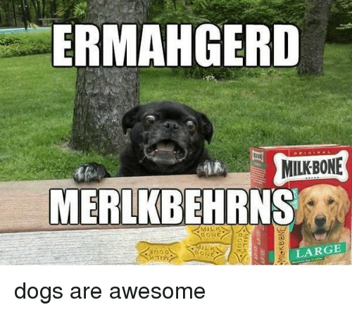 large dogs: ERMAHGERD  MILKBONE  MERLKBEHRNS  LARGE dogs are awesome