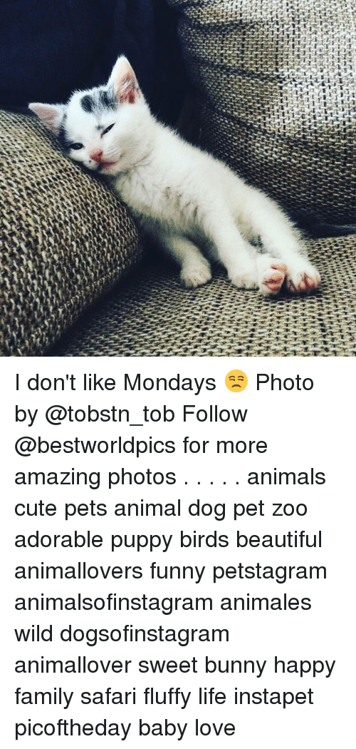 adorable puppy: err  躉 I don't like Mondays 😒 Photo by @tobstn_tob Follow @bestworldpics for more amazing photos . . . . . animals cute pets animal dog pet zoo adorable puppy birds beautiful animallovers funny petstagram animalsofinstagram animales wild dogsofinstagram animallover sweet bunny happy family safari fluffy life instapet picoftheday baby love