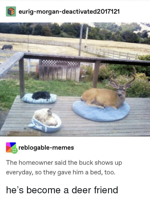 Deer, Memes, and Him: eurig-morgan-deactivated2017121  reblogable-memes  The homeowner said the buck shows up  everyday, so they gave him a bed, too. he's become a deer friend