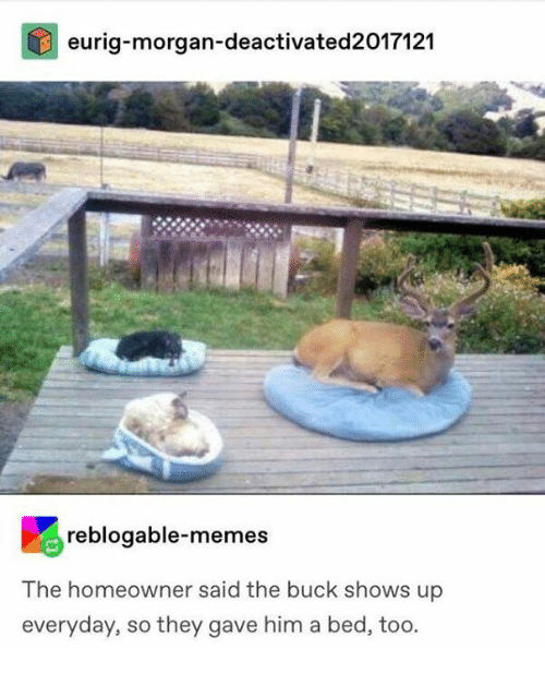 Dank, Memes, and 🤖: eurig-morgan-deactivated2017121  reblogable-memes  The homeowner said the buck shows up  everyday, so they gave him a bed, too.