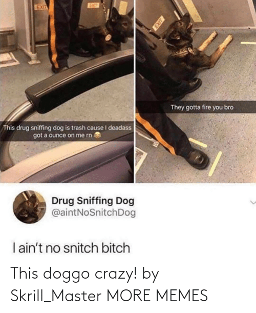 No Snitch: EUT  EXIT  They gotta fire you bro  This drug sniffing dog is trash cause I deadass  got a ounce on me rn  Drug Sniffing Dog  @aintNoSnitchDog  I ain't no snitch bitch This doggo crazy! by Skrill_Master MORE MEMES