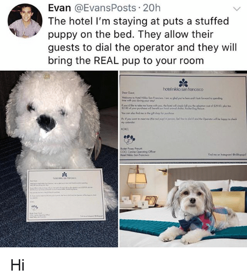 Conne: Evan @EvansPosts 20h  The hotel I'm staying at puts a stuffed  puppy on the bed. They allow their  guests to dial the operator and they will  bring the REAL pup to your room  hotelnikko san francisco  Deor Guest  Bosher Pooey P  COO, Conne Operating Offce Hi