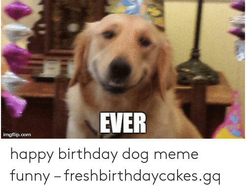 25 Best Memes About Happy Birthday Dog Meme Funny Happy