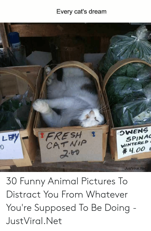 Cats, Fresh, and Funny: Every cat's dream  LEY  FRESH  CATNIP  OWENS  SPINAC  WINTERED  4.00 E  JustViral.Net 30 Funny Animal Pictures To Distract You From Whatever You're Supposed To Be Doing - JustViral.Net