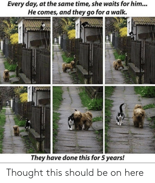 5 Years: Every day, at the same time, she waits for him...  He comes, and they go for a walk.  They have done this for 5 years! Thought this should be on here