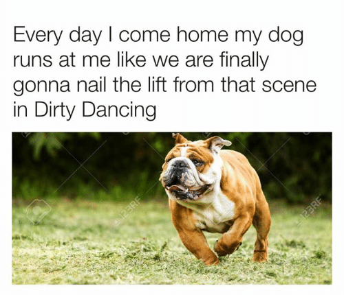 123Rf: Every day I come home my dog  runs at me like we are finally  gonna nail the lift from that scene  in Dirty Dancing  123RF  123RF