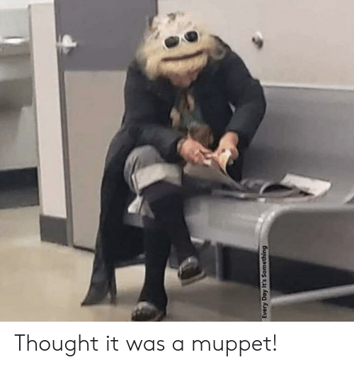 Thought, Muppet, and Day: Every Day It's Something Thought it was a muppet!