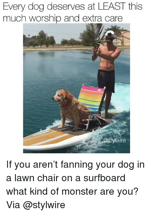 Memes, Monster, and Chair: Every dog deserves at LEAST this  much worship and extra care  yWire If you aren't fanning your dog in a lawn chair on a surfboard what kind of monster are you? Via @stylwire