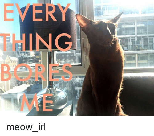 Irl, Cat IRL, and Thing: EVERY  THING  BORES  ME