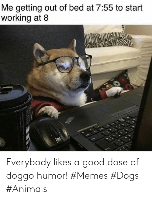 Everybody: Everybody likes a good dose of doggo humor! #Memes #Dogs #Animals