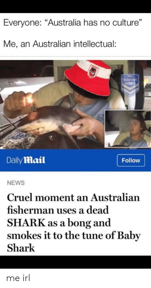 """Bong: Everyone: """"Australia has no culture""""  Me, an Australian intellectual:  NRL  SLEDGING  REBELS  DailyMail  Follow  NEWS  Cruel moment an Australian  fisherman uses a dead  SHARK as a bong and  smokes it to the tune of Baby  Shark me irl"""
