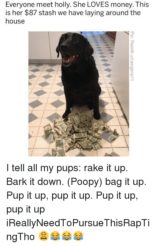 stash: Everyone meet holly. She LOVES money. This  is her $87 stash we have laying around the  house  5 I tell all my pups: rake it up. Bark it down. (Poopy) bag it up. Pup it up, pup it up. Pup it up, pup it up iReallyNeedToPursueThisRapTingTho 😩😂😂😂