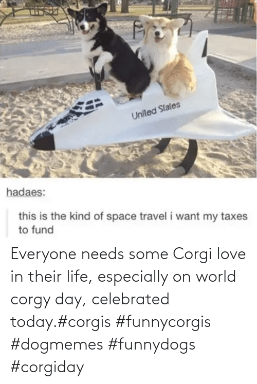 everyone: Everyone needs some Corgi love in their life, especially on world corgy day, celebrated today.#corgis #funnycorgis #dogmemes #funnydogs #corgiday