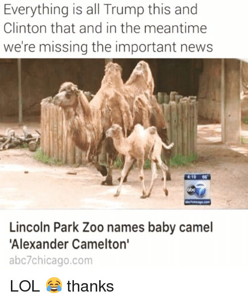 camel: Everything is all Trump this and  Clinton that and in the meantime  we're missing the important news  419 66  obc  Lincoln Park Zoo names baby camel  Alexander Camelton'  abc7chicago.com LOL 😂 thanks