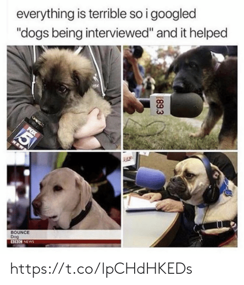 "bounce: everything is terrible so i googled  ""dogs being interviewed"" and it helped  FOX  5  NEW  BOUNCE  Dog  BO NEWS  89.3 https://t.co/lpCHdHKEDs"