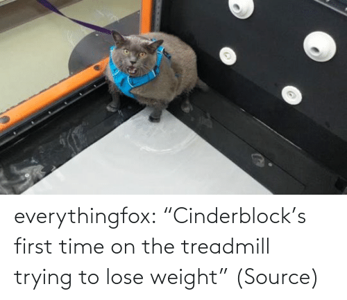"lose: everythingfox: ""Cinderblock's first time on the treadmill trying to lose weight"" (Source)"