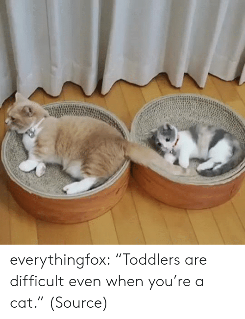 "Toddlers: everythingfox: ""Toddlers are difficult even when you're a cat."" (Source)"