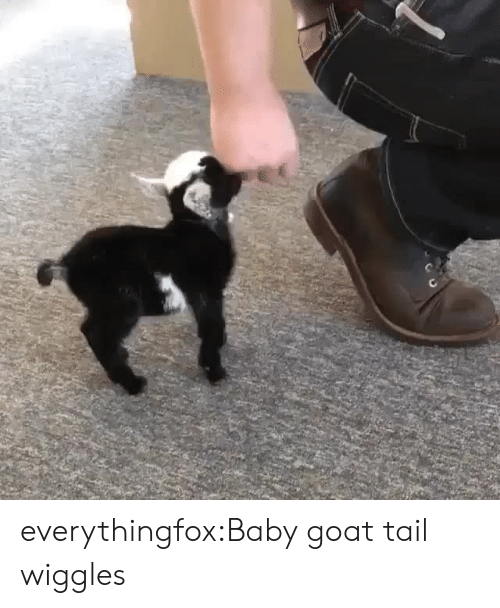 Aww, Tumblr, and Goat: everythingfox:Baby goat tail wiggles