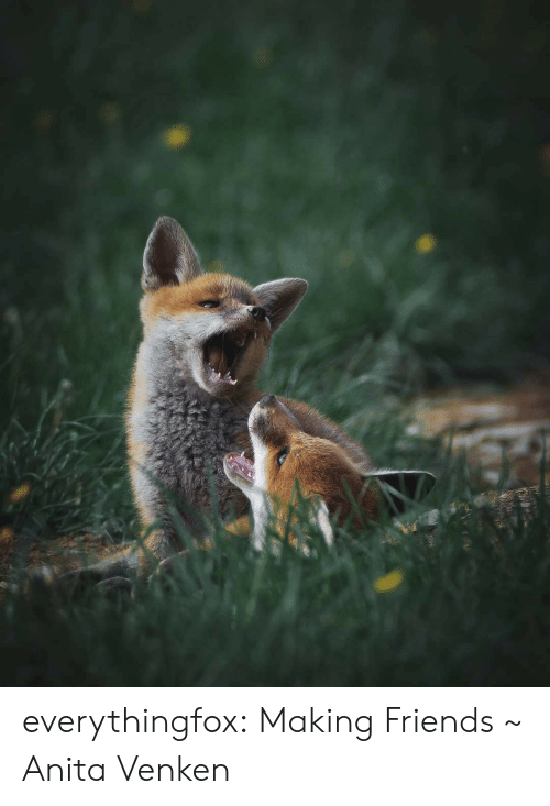 Anita: everythingfox:  Making Friends ~ Anita Venken