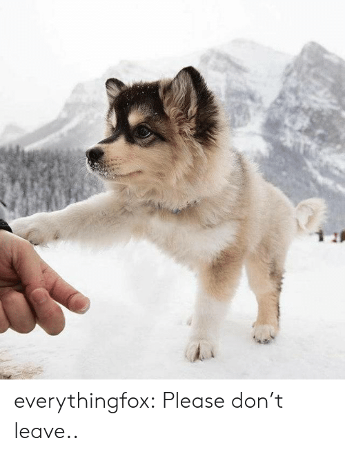 Please Don: everythingfox:    Please don't leave..