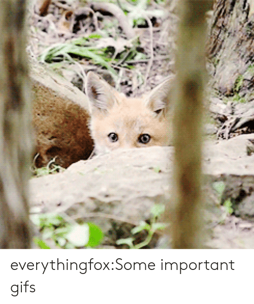 Tumblr, Blog, and Gifs: everythingfox:Some important gifs