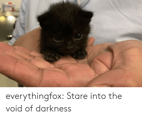 stare: everythingfox:  Stare into the void of darkness