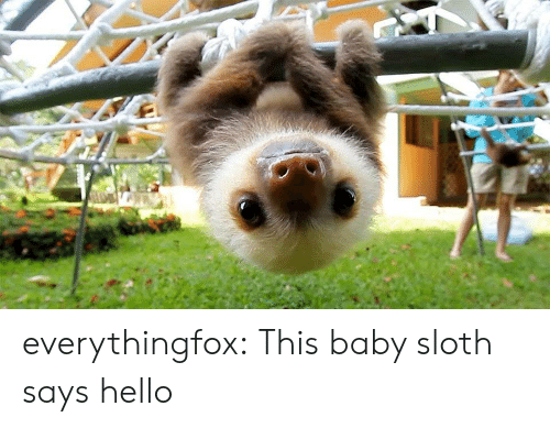 Sloth: everythingfox: This baby sloth says hello