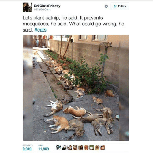 Cats, Memes, and 🤖: EvilChrisPriestly  TheEvilChris  Follow  Lets plant catnip, he said. It prevents  mosquitoes, he said. What could go wrong, he  said. #cats  RETWEETS  UKES  9,949  11,909