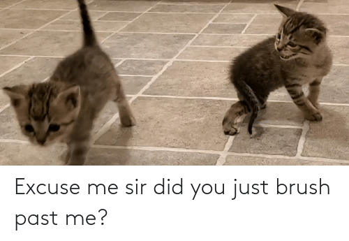 excuse me: Excuse me sir did you just brush past me?