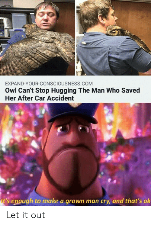 consciousness: EXPAND-YOUR-CONSCIOUSNESS.COM  Owl Can't Stop Hugging The Man Who Saved  Her After Car Accident  t's enough to make a grown man cry, and that's ok Let it out