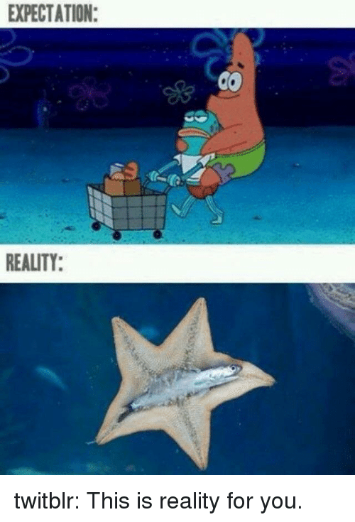 Expectation Reality: EXPECTATION:  REALITY: twitblr:  This is reality for you.