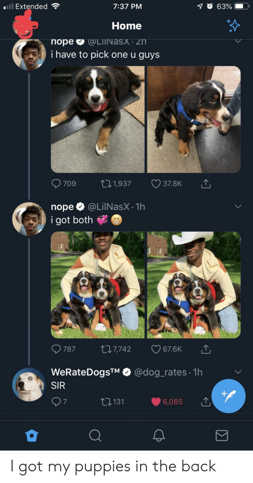 Puppies, Home, and Nope: Extended  7:37 PM  Home  i have to pick one u guys  nope @LilNasX.1h  i got both  787 t 7,742 67.6K  WeRateDogsTM @dog_rates 1h  SIR  6,085  t131  7 I got my puppies in the back