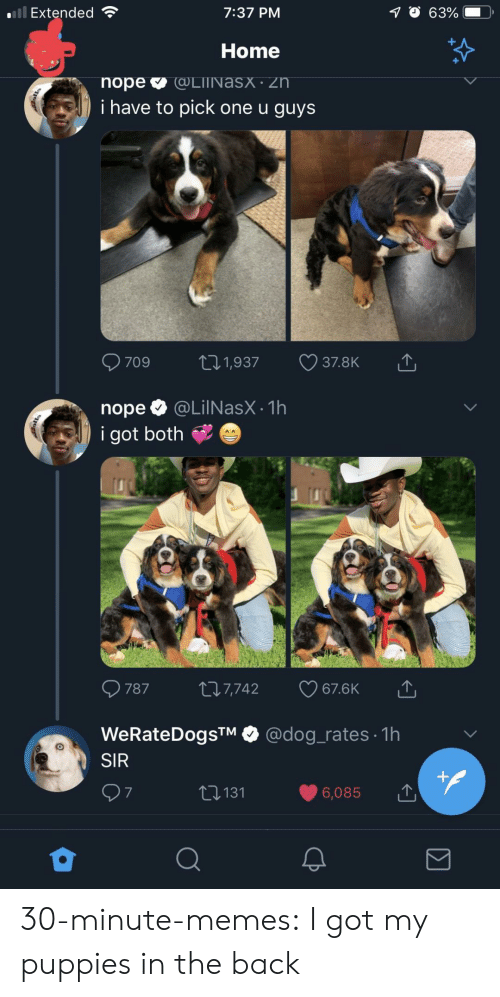 Memes, Puppies, and Tumblr: Extended  7:37 PM  Home  i have to pick one u guys  nope @LilNasX.1h  i got both  787 t 7,742 67.6K  WeRateDogsTM @dog_rates 1h  SIR  6,085  t131  7 30-minute-memes:  I got my puppies in the back