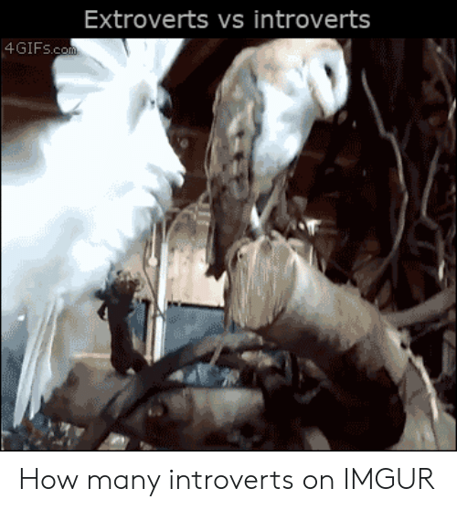 Imgur, How, and Com: Extroverts vs introverts  4GIFS.com How many introverts on IMGUR