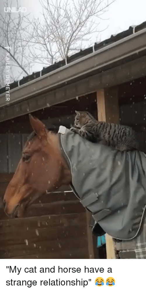 """Dank, Horse, and 🤖: EY DEMEYER """"My cat and horse have a strange relationship"""" 😂😂"""