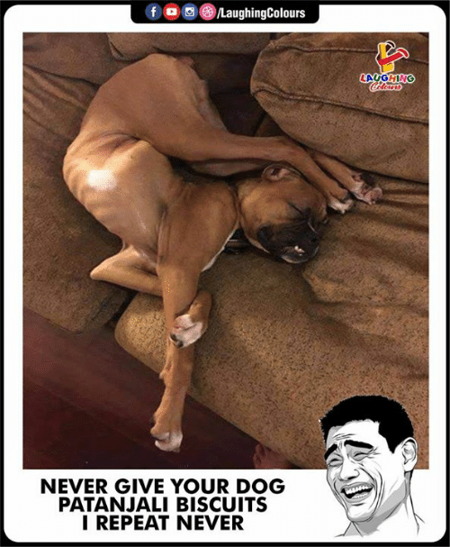 patanjali: f  0, 8)/LaughingColours  LAUGHING  NEVER GIVE YOUR DOG  PATANJALI BISCUITS  I REPEAT NEVER