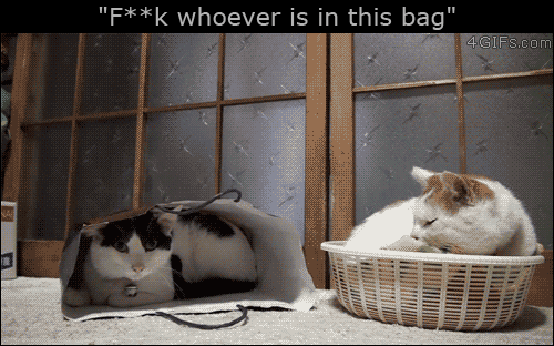 "Com, This, and 4gifs: ""F**k whoever is in this bag""  4GIFS.com"