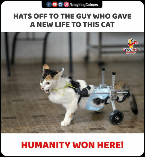 New Life: f  LaughingColours  HATS OFF TO THE GUY WHO GAVE  A NEW LIFE TO THIS CAT  LAUGHING  Celours  HUMANITY WON HERE!  www.