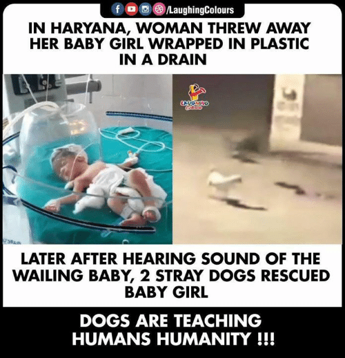 Dogs, Girl, and Humanity: f /LaughingColours  IN HARYANA, WOMAN THREW AWAY  HER BABY GIRL WRAPPED IN PLASTIC  IN A DRAIN  LAUONING  DRAIN  LATER AFTER HEARING SOUND OF THE  WAILING BABY, 2 STRAY DOGS RESCUED  BABY GIRL  DOGS ARE TEACHING  HUMANS HUMANITY!!!