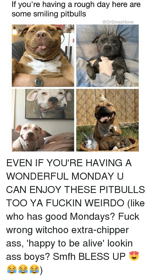 Lookin Ass: f you're having a rough day here are  some smiling pitbulls  @DrSmashlove EVEN IF YOU'RE HAVING A WONDERFUL MONDAY U CAN ENJOY THESE PITBULLS TOO YA FUCKIN WEIRDO (like who has good Mondays? Fuck wrong witchoo extra-chipper ass, 'happy to be alive' lookin ass boys? Smfh BLESS UP 😍😂😂😂)