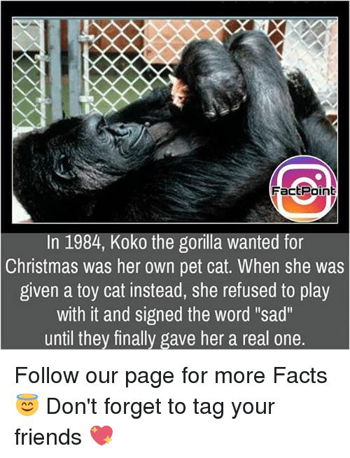 """Petting Cat: FactPoint  In 1984, Koko the gorilla wanted for  Christmas was her own pet cat. When she was  given a toy cat instead, she refused to play  with it and signed the word """"sad""""  until they finally gave her a real one. Follow our page for more Facts 😇 Don't forget to tag your friends 💖"""